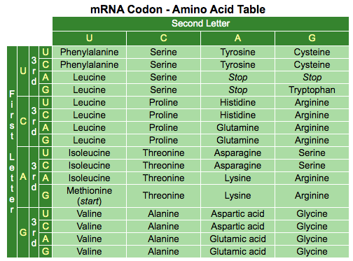 mRNA Codon Amino Acid Table